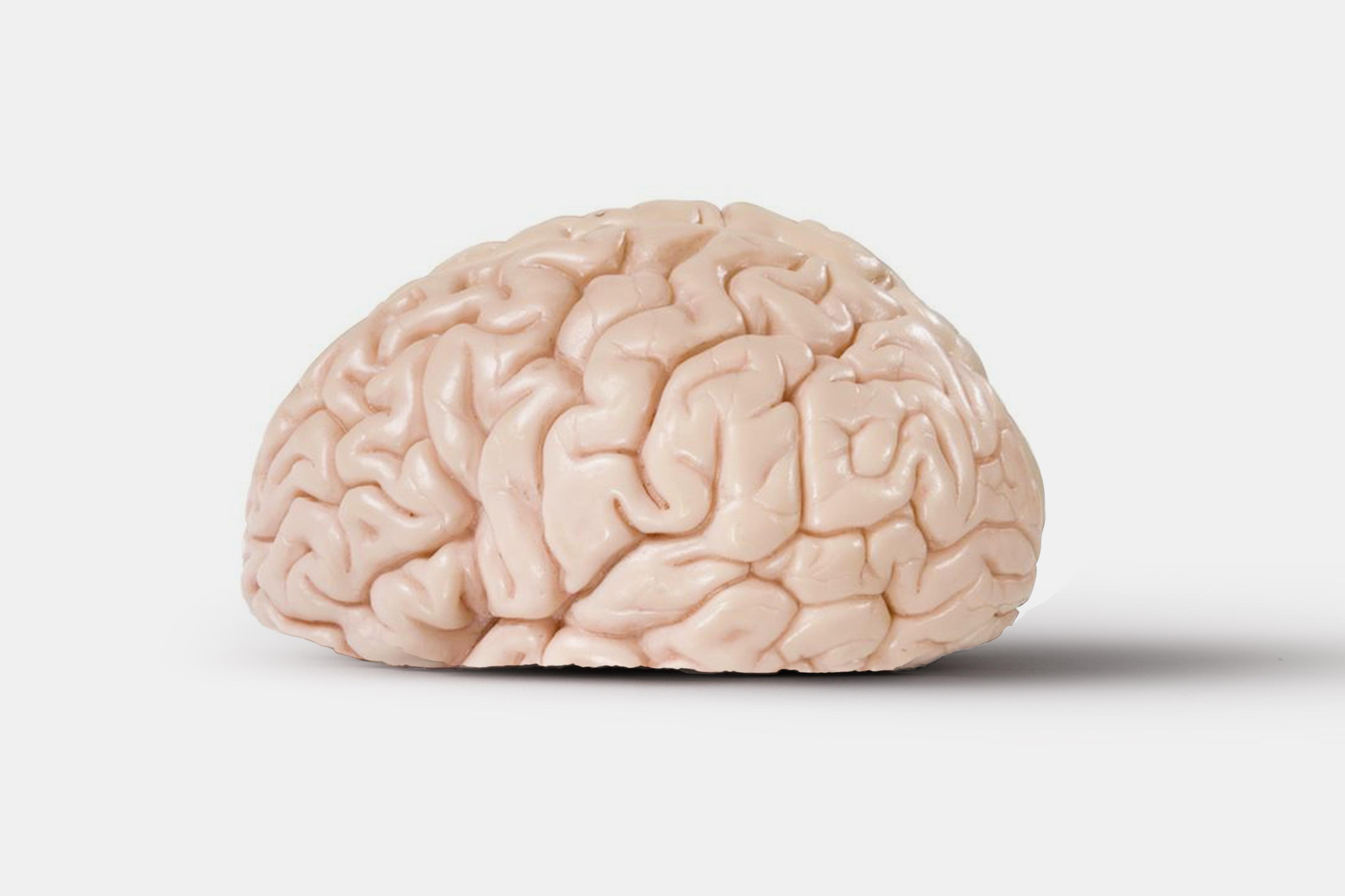SAM_Brain